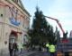 Big is beautiful for Melksham's Christmas tree