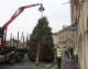 Big is beautiful as Melksham's Christmas tree arrives