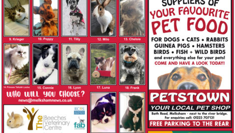 National Pet Month- Vote for  melksham's  Cutest Pet!