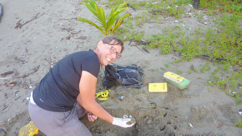 Local volunteer joins the fight to save endangered turtles