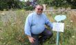Wild about Melksham! Have your say on wildflower havens in Melksham