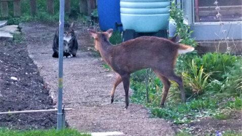 An en'deer'ing moment!